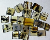 Montana Agate Assorted Cabochons