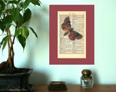 Copper Underwing Moth Vintage Art Print on Antique 1896 Dictionary Book Page