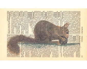 Squirrel Art Print on Antique 1896 Dictionary Book Page