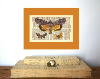 Collection of Moths Vintage Art Print on Antique 1896 Dictionary Book Page