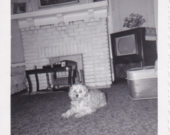 Dog in the Living Room - Vintage Photograph (H)