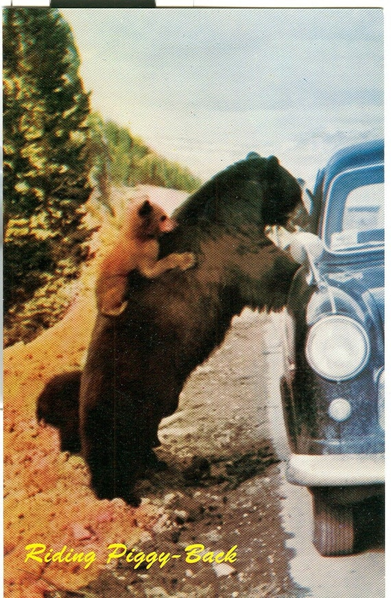 Vintage Riding Piggy-Back Bears Canadian Rockies Postcard