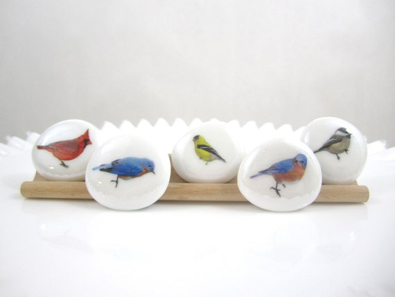 FREE United States Shipping, Bird Watcher, LARGE Glass Circle Magnets, Set of 5, Round Glass Magnets, Neodymium Magnets