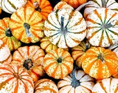Pumpkin Photograph Fine Art Nature Macro 8 x 8 Print Halloween Harvest Fall Autumn Outdoors Culinary Squash Food Kitchen