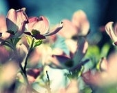 Reflections in Pink - Part One - 8x10 Fine Art Photography - Dreamy Pink Flowers Caught Up in Teal Lighting