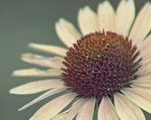 Anna Smiled - 8x8 Fine Art Photograph - Daisy Portrait Signifies An Independent Spirit