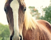 16x20 The Coltish Way of Life - Equine Horse Photography, Country Chic, Cottage Style, Farmhouse Decor