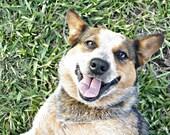 Happy - 8x10 Fine Art Photography - Dog Portrait on Green Grass, Summer Fun, Whimsical Home Decor