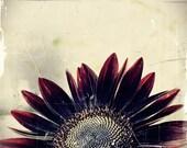 Summer Romance - 8x8 Fine Art Photography - Red Sunflowers, Garden Art Floral Portraits