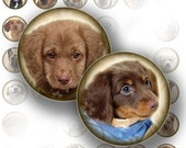 1 inch circle art downloads digital collage sheet bottle cap images jewelry making paper supplies dog puppy graphics (069) BUY 3 GET 1 FREE