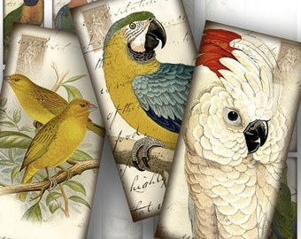 1x2 inch dominoes tile digital collage sheet images Victorian birds postcard download paper jewelry making supplies(054) BUY 3 GET 1 FREE