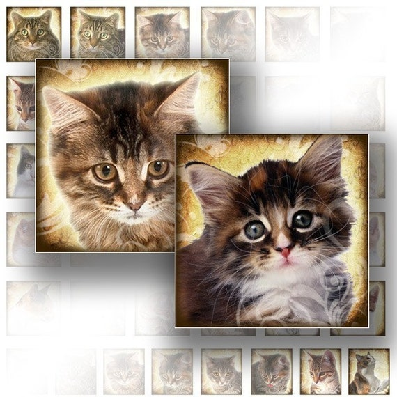 Cats kittens 1 x1 inch digital collage sheet scrabble tile art jewelry making paper supplies download image file (066) BUY 3 GET 1 FREE