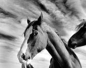 Horse Kisses - 8x10 Fine Art Photograph