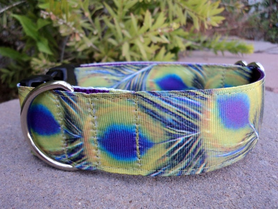 """Large Dog Collar Peacock Feathers 1.5"""" wide Quick Release or Martingale collar style"""