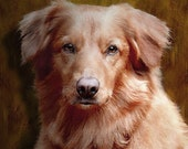 Gorgeous Golden Retriever Painting on 8 x 8 stretched canvas