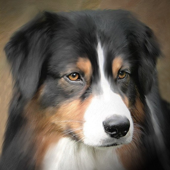 Custom Dog Portrait Australian Shepherd 8 x 8 stretched canvas or mounted canvas