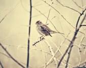 Sweet little bird sitting on a branch Fine Art Metallic Print 8x8