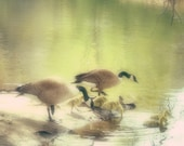 Wading Ducks Fine Art Metallic Photo Print 5x5