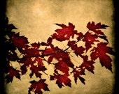 Garnet Red Leaves with Gothic Grunge Texture Fine Art Metallic Photo Print 5x5