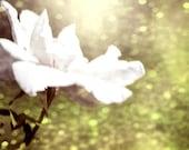 Glitter Bokeh Soft White Rose Flower Fine Art Metallic Photo Print 8x8