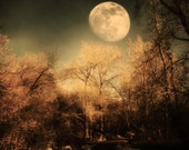 Dark Trees and  Moon 8x12 Fine Art Metallic Photo