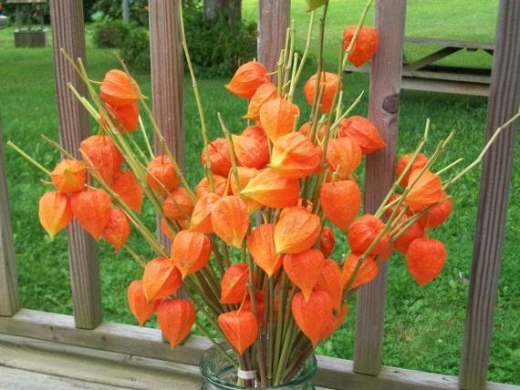 One Beautiful Bouquet of Chinese Lanterns