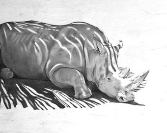 Rhinocerusosus. Original Drawing.
