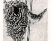 Marsh Wren Nest Fine Art Etching