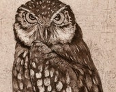 Burrowing Owl, Hand-pulled Etching