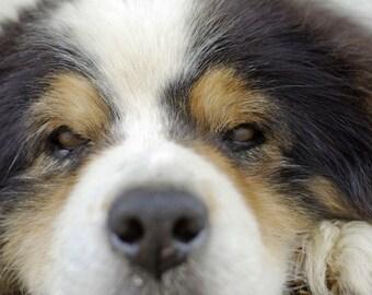 A  Dogs Eye View A  Fine Art Dog Photo