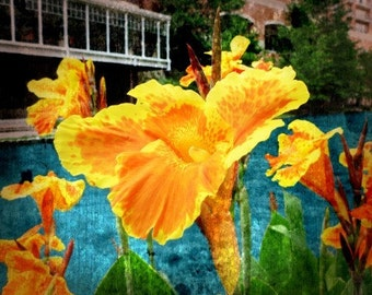 Fine Art Photograph - Vintage Riverwalk - Yellow Flower 8x10