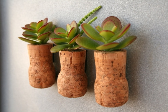CUSTOM Listing for Amy Succulent Cork Magnets, Champagne Jade, Set of 3 plus 1