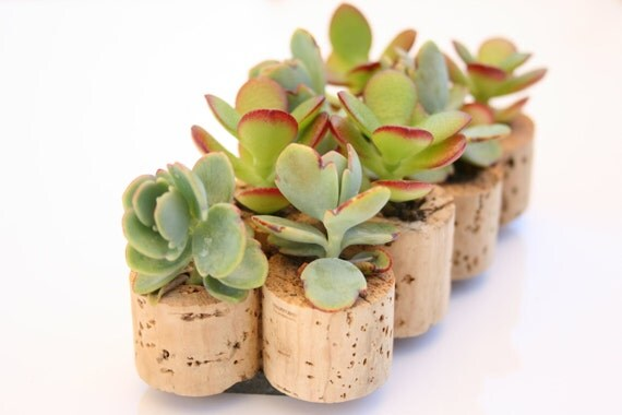 Mini Succulent Cork Magnets, Mixed Set of 4