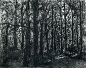 Almost abstract  'Jennie and Frank's wood'. Charcoal Drawing. Limited edition print one of only 25. FREE postage