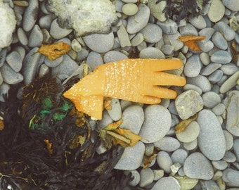 Orange Glove with tangle of seaweed. Creeping glove, as found photograph Limited Edition print one of only 25.. FREE World Postage