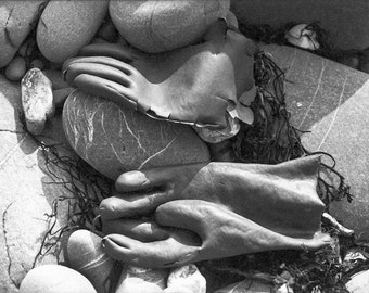 Surreal spooky, torn Black Gloves - found on a beach in North Cornwall. Black & white photograph Limited Edition print. Free world postage