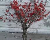 Red Winterberries Maine Holly Branches- Ilex verticillata