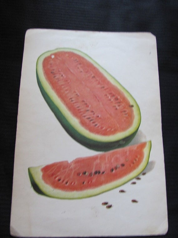 Large Illustrated School Flash Card Poster - Alphabet Letter - W - Watermelon