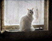 Lonely Barn Cat - 8x10 Fine Art Print