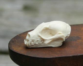 bat skull replica