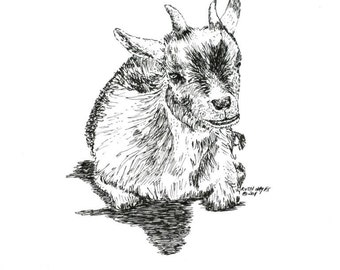"Pygmy Goat  Pen and Ink Resting Animal Art Original Wildlife Wall Home Decor 5"" x 7"" Nursery Decor Children's Art Black White"