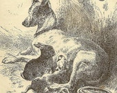 Engraving - A Happy Family - Terrier with puppy and bunny  Original Bookplate from 1881 Chatterbox by Harrison Weir