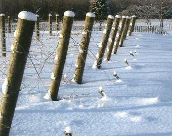 Vineyard in Winter Nature Photography on Blank Note Card - Fresh fallen snow - Serene Winter Photograph