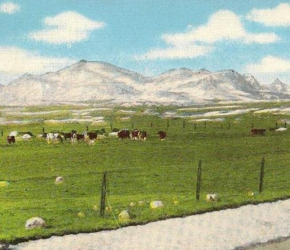 Snow Capped Rocky Mountains Western MONTANA Vintage Linen Cecil Nixon  Postcard
