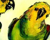 2 Parrots - 11x14 matted print signed