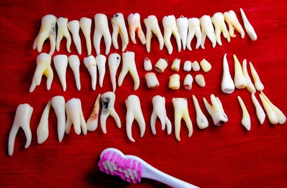Human teeth beads (handmade replicas). Assortiment of 50 pieces (molars, premolars, incisives, child teeth). Made to order