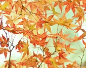 Autumn Photography, Orange Fall Leaves, Harvest, Fall Wall Art, Maple Leaves, Green Yellow Autumn Print
