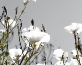 White Flower Photography, Nature Photography, Modern, Grey Wall Art, Flower Photography, Fresh, White, Floral Print, 8x10