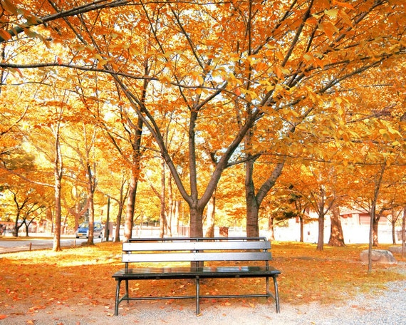 autumn leaves on bench - photo #18