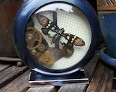 Am I Blue - Steampunk - Mix Media - Real Insect - Glenea Cheni (Cicada)